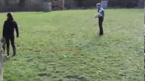 Schutzhund / IPO 1 Obedience, Protection, Tracking
