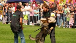 Schutzhund in Action Working Dog Show