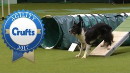 Agility Championship Final | Crufts 2017